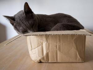 katt i boks2