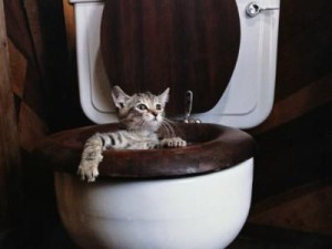 katt i do