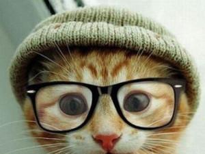 katt i briller