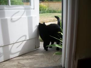 katten i døra