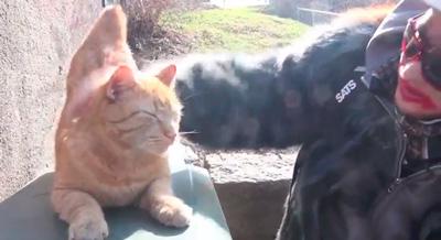 JOslo med katt